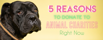 5 Reasons to Donate to Animal Charities Right Now