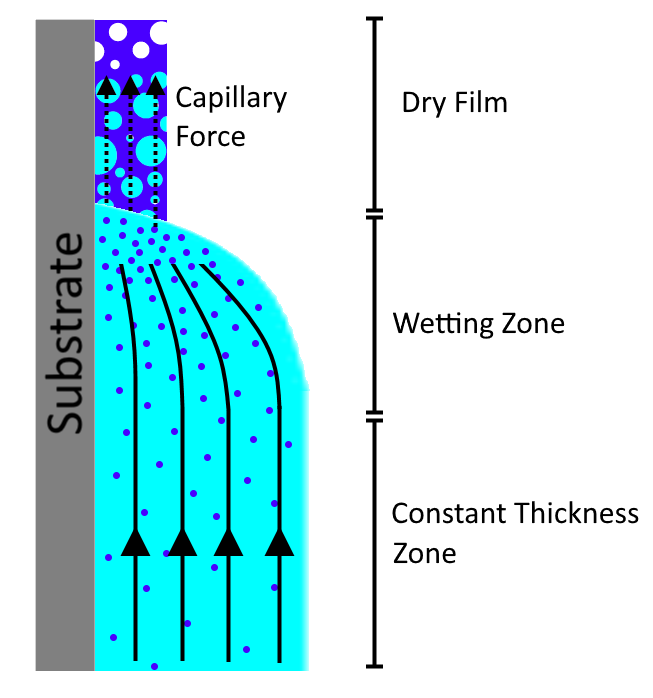 Dynamic of drying in dip coating