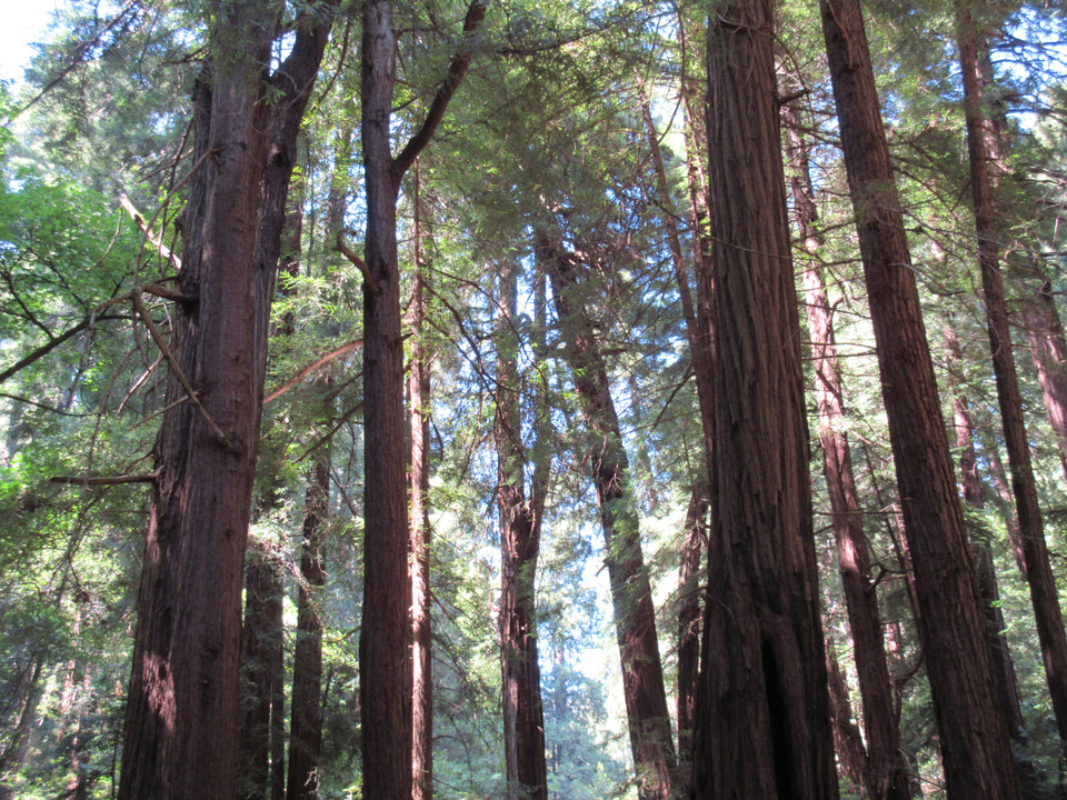 Muir Woods National Monument Your True Nature Inc
