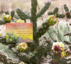 Advice from a Cactus Jumbo Magnet
