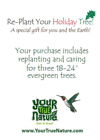 Replant your Holiday Tree