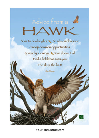 Advice from a Hawk Mini Poster