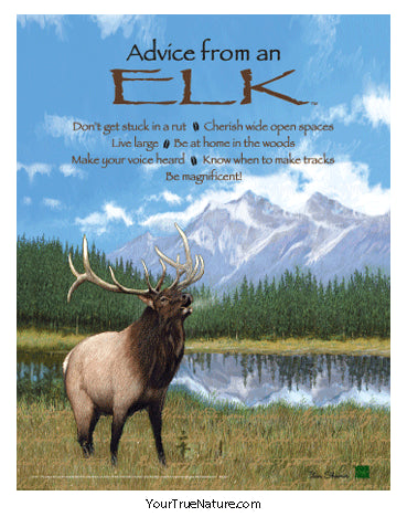 Advice from an Elk Poster