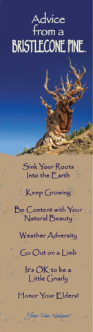 Advice from a Bristlecone Pine Laminated Bookmark