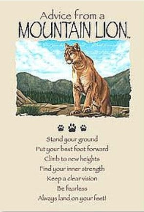 Advice from a Mountain Lion Greeting Card - Birthday