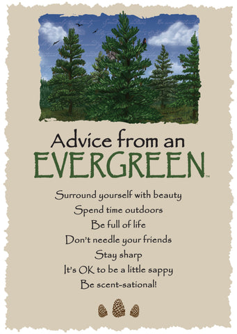 Advice from an Evergreen Greeting Card - Blank