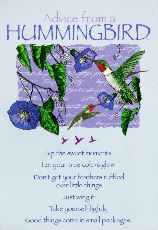 Advice from a hummingbird greeting card birthday your true advice from a hummingbird greeting card birthday m4hsunfo