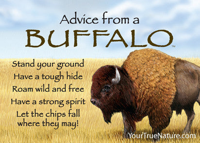 Advice from a Buffalo Jumbo Magnet