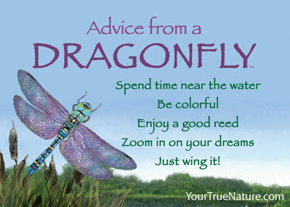 Advice from a Dragonfly Jumbo Magnet