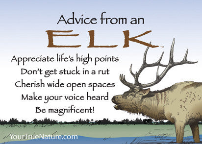Advice from an Elk Jumbo Magnet