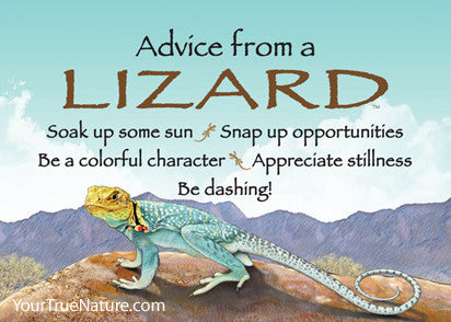Advice from a Lizard Jumbo Magnet