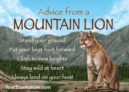 Advice from a Mountain Lion Jumbo Magnet