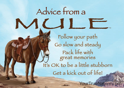 Advice from a Mule Jumbo Magnet