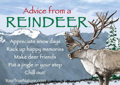 Advice from a Reindeer Jumbo Magnet – Your True Nature Inc