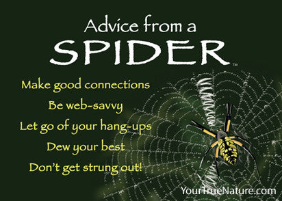 Advice from a Spider Jumbo Magnet