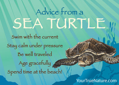 Advice from a Sea Turtle Jumbo Magnet  Your True Nature Inc