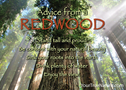 Advice from a Redwood Jumbo Magnet
