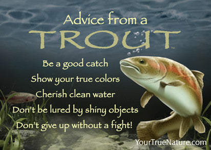 Advice from a Trout Jumbo Magnet