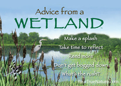 Advice from a Wetland Jumbo Magnet