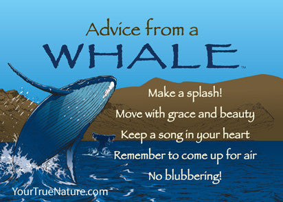 Advice from a Whale Jumbo Magnet
