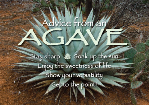 Advice from an Agave - Jumbo Magnet