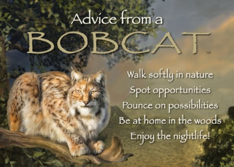 Advice from a Bobcat Jumbo Magnet