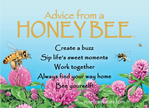 Advice from a Honey Bee Jumbo Magnet