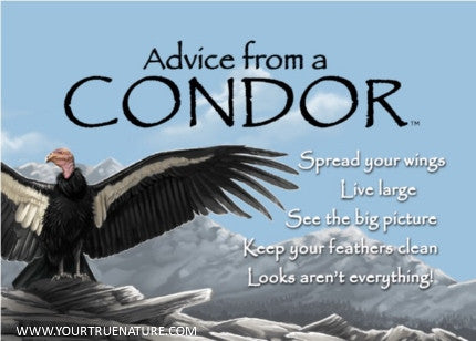 Advice from a Condor Jumbo Magnet