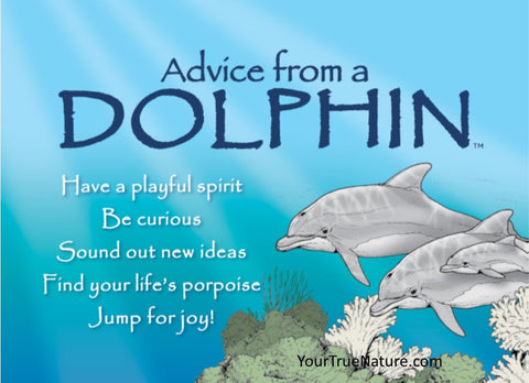 Advice from a Dolphin Jumbo Magnet
