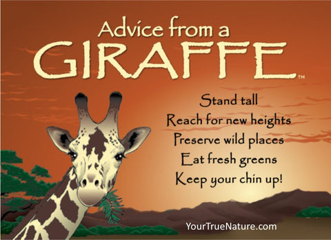 Advice From A Giraffe Jumbo Magnet Your True Nature Inc