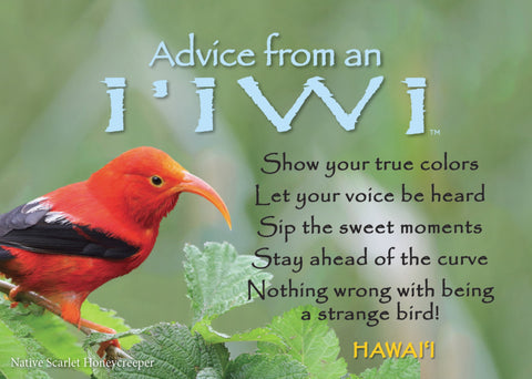 Advice from an I'iwi- Hawaii- Jumbo Magnet