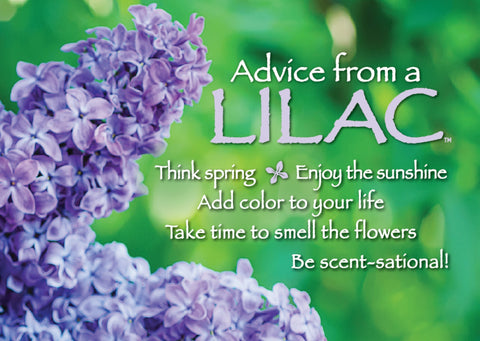 Advice from a Lilac Jumbo Magnet