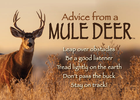 Advice from a Mule Deer Jumbo Magnet