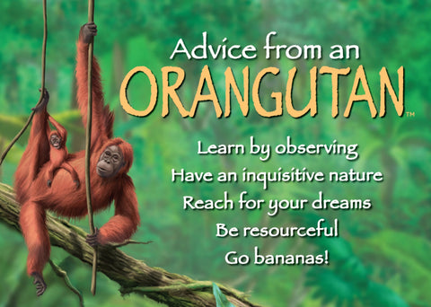 Advice from an Orangutan Jumbo Magnet