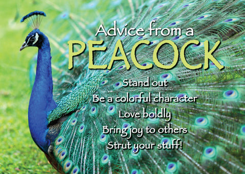 Advice from a Peacock Jumbo Magnet