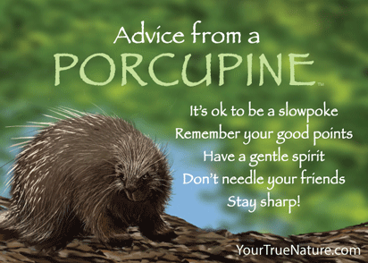 Advice from a Porcupine Jumbo Magnet