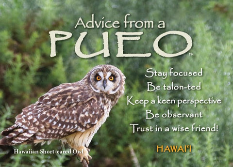Advice from a Pueo- Hawai'i- Jumbo Magnet