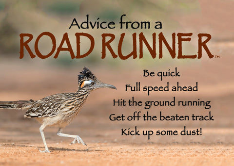 Advice from a Roadrunner- Jumbo Magnet