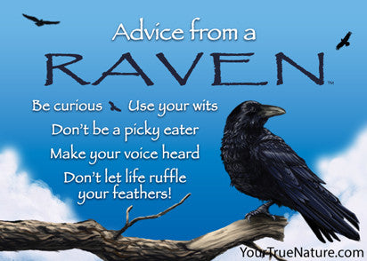 Advice from a Raven Jumbo Magnet
