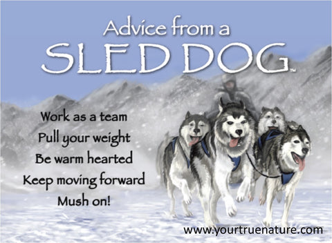 Advice from a Sled Dog Jumbo Magnet