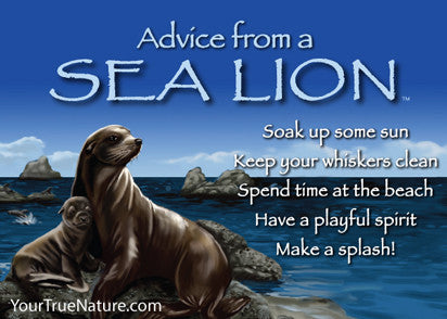 Advice from a Sea Lion Jumbo Magnet