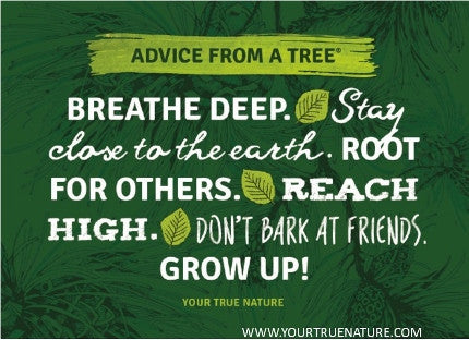 Advice from a Tree - 15th Anniversary Jumbo Magnet