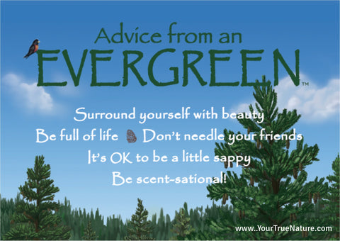 Advice from an Evergreen Jumbo Magnet