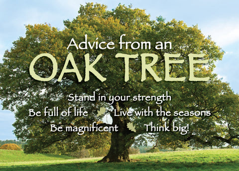 Advice from an Oak Tree Jumbo Magnet