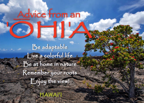 Advice from an 'Ohi'a- Hawai'i- Jumbo Magnet