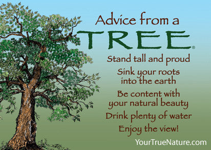 Advice from a Tree Jumbo Magnet