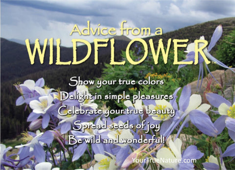 Advice from a Wildflower - Columbine Jumbo Magnet