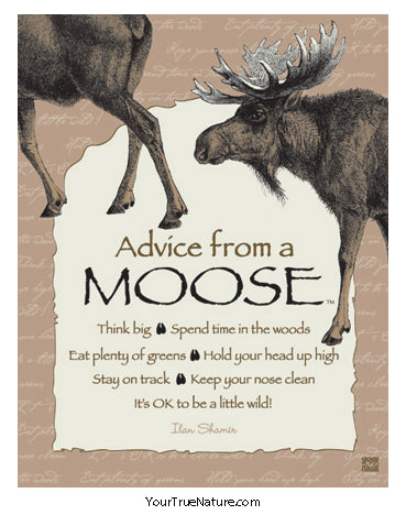 Image result for advice moose