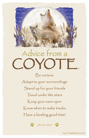 Advice from a Coyote Frameable Art Postcard