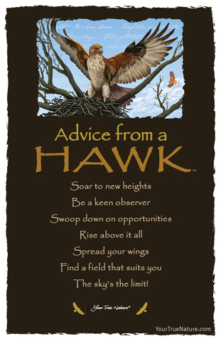 Advice from a Hawk Frameable Art Card